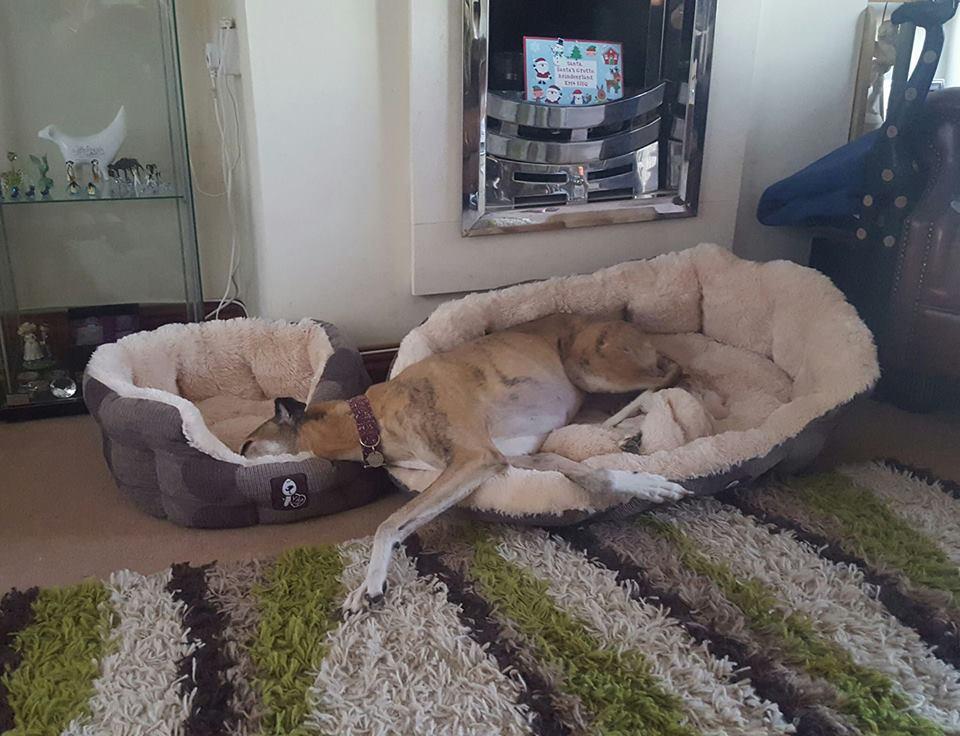 Sometimes One Bed is simply not enough.
