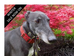 TheTrust Dog - Best Lurcher Collars