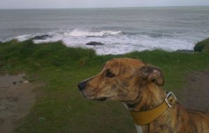 Cool Dog in Cornwall