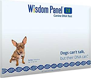 Dog DNA tests