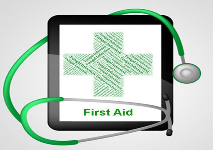 Dog First aid Kit – Everything you need and where to get it