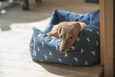 lurcher dog beds
