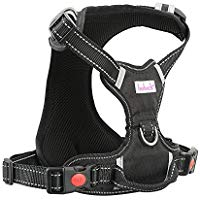 Recall training Harness