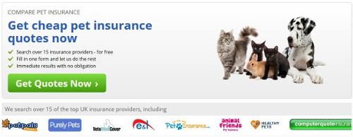 dog insurance 4